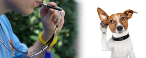 Dog Listening to Whistle
