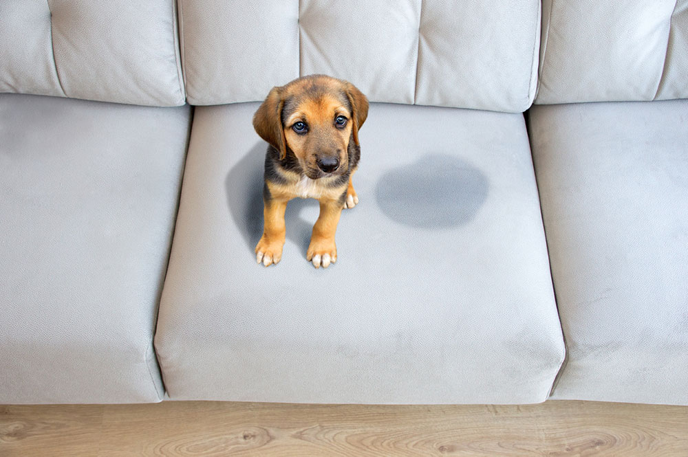 What Is the Best Age to Start Dog Potty Bell Training