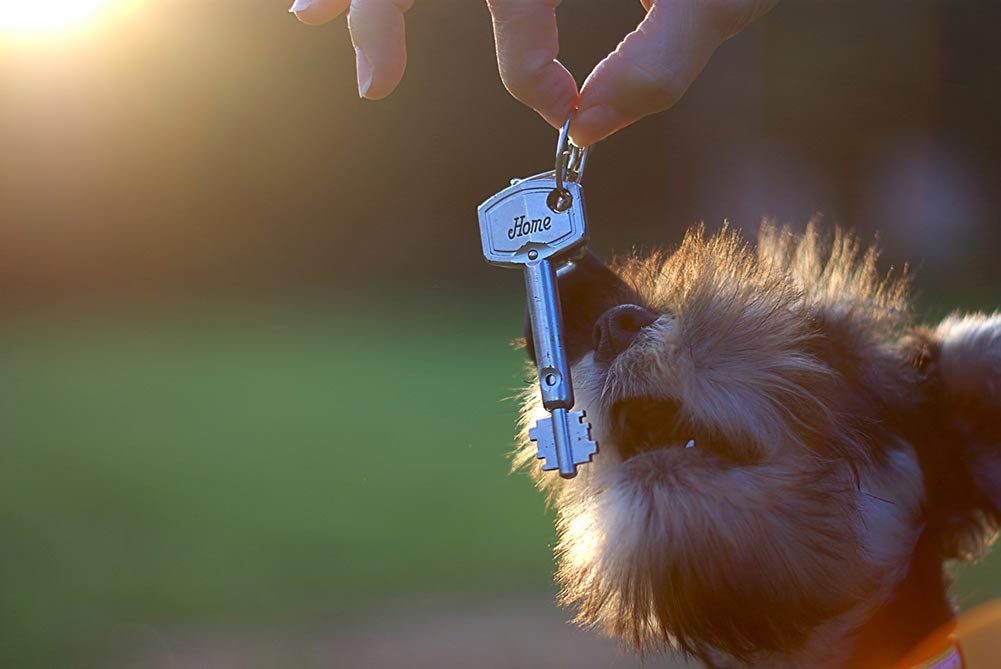 Teach Your Dog to Find Keys